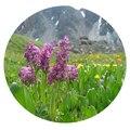 Семена цветов Хохлатки