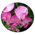 Семена цветов Горошка