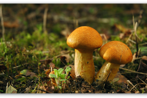 Теперь в нашем магазине Грин Агро  - есть мицелий грибов