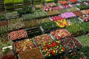 Открыто направление профессиональные цветы