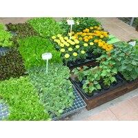 Опыт применения безбалластных иркутских гуматов (леонардитов) на цветах и декоративно-кустарниковых культурах
