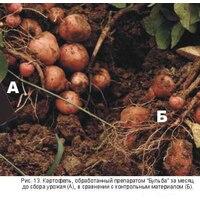 Применение гуматов на картофеле. Удобрения для Картофеля БУЛЬБА