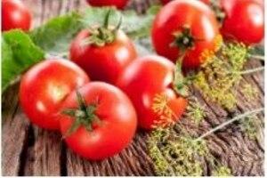 Как вырастить богатый урожай томатов без нитратов?