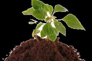 Эффективность гуматов против болезней растений