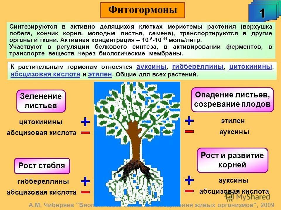 Фитогормоны и ауксины