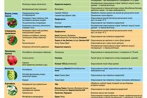 Рекомендации по защите растений и культур от компании Август