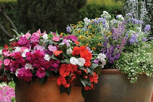 Производители семян цветов