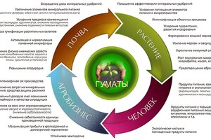 Гумат, гуминовые удобрения и стимуляторы: состав и особенности использования