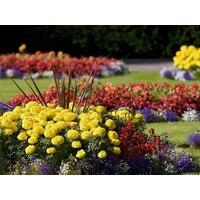 Как выбрать цветы для клумбы и балкона?