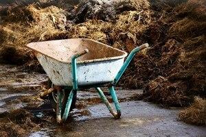 Как сделать почву плодородной?сидераты и почвоулучшители