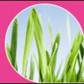 Регуляторы роста растений (ретардантам)