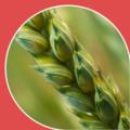 Средства уничтожения растительности (гербициды)