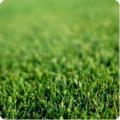 Семена травы для низкорослого газона