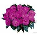 Семена цветов Бальзамина