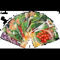 Семена комнатных растений и овощей