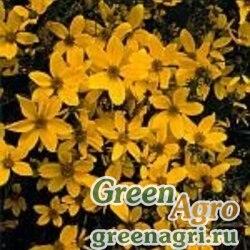 Череда золотистая (Bidens aurea ) 20 г