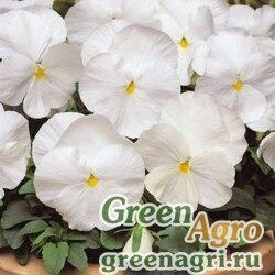 """Виола виттрока (Viola wittrockiana) """"Clear Crystals"""" (white) raw 10 гр."""