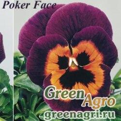 """Виола виттрока (Viola wittrockiana) """"Joker F2"""" (poker face) Raw 1000 шт."""