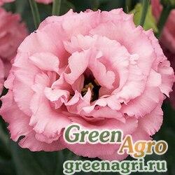 Эустома крупноцветковая Корелли III Роуз 100драже