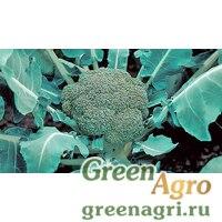 Семена Монтоп F1 2,5тыс. семян, Syngenta