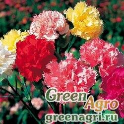"""Гвоздика садовая (Dianthus caryophyllus) """"Chabaud"""" (mix) 25 гр."""
