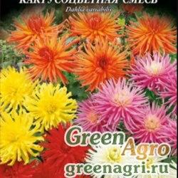 Георгина летняя (Dahlia variabilis) (кактусоцветная смесь) 20 гр.