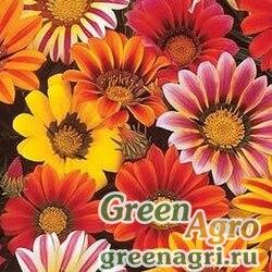 "Гацания жестковатая (Gazania rigens) ""Sunshine"" (mix) raw 10 гр."