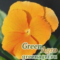 Анютины глазки Оранжевое солнышко  (упак-50 гр.)
