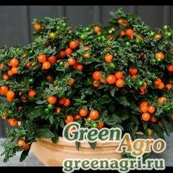"""Паслен ложноперечный (Solanum pseudocapsicum) """"Thurino Light"""" raw 1000 шт."""