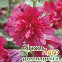 "Мальва (Штокроза) розовая (Alcea rosea annua) ""Spring Celebrities"" (Carmine-rose) raw 1000 шт."