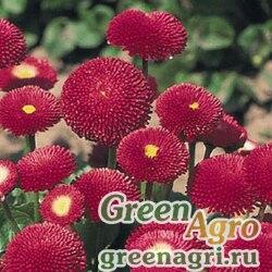 "Маргаритка многолетняя (Bellis perennis) ""Bellissima"" (red) pelleted 1000 шт."