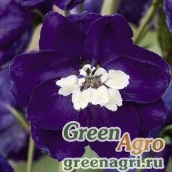 """Дельфиниум высокий (Delphinium elatum) """"Magic Fountains"""" (dark blue with white bee) raw 1000 шт."""
