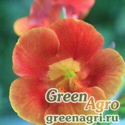 "Губастик гибридный (Mimulus x hybrida) ""Twinkles F2"" (orange) 0.5 гр."