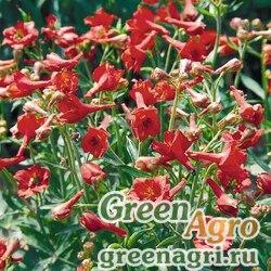 """Дельфиниум голостебельный (Delphinium nudicaule) """"Fox"""" (red) raw Произв. 1000 шт."""
