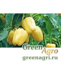 Семена Пируэт F1 0,5тыс. семян, Syngenta