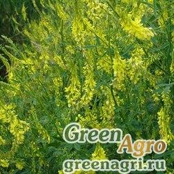 Донник желтый 3 кг. Зеленый уголок