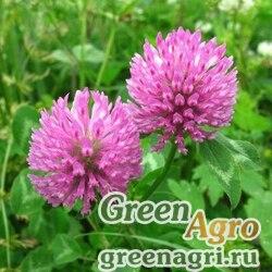 Клевер красный луговой 3 кг Зеленый уголок