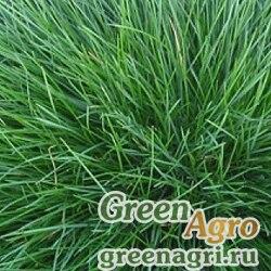 Полевица побегоносная 0,2 кг Зеленый уголок х20