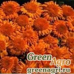 """Календула лекарственная (Calendula officinalis) """"Kablоuna"""" (deep orange) 60 гр."""