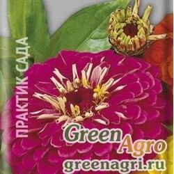 Цинния георгиноцветковая Волшебная роза  (упак-50 гр.)