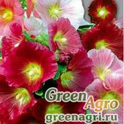 Шток-роза Индийская весна  (упак-50 гр.)