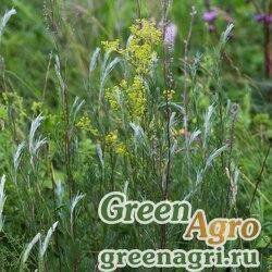 Полынь Маршалла (Artemisia marschalliana) 3 гр.