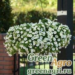 """Калибрахоа гибридная ампельная (Calibrachoa hybrida) """"Kabloom"""" (white) Pelleted 1000 шт."""
