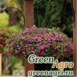 "Калибрахоа гибридная ампельная (Calibrachoa hybrida) ""Kabloom"" (deep pink) pelleted 100 шт."