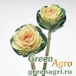 "Капуста декоративная (Brassica oleracea) ""Sunrise"" (white) Raw 1000 шт."