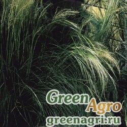 "Семена Ковыль тончайший (Stipa tenuissima) ""Pony Tails"" (green) multi-pelleted 1000 шт."