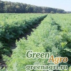 Семена Укроп Аллигатор (1уп-10 гр)