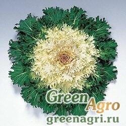 "Капуста декоративная (Brassica oleracea) ""Coral Prince F1"" raw 1000 шт."