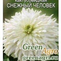 Циния Снежный человек кактусовидная Аэлита Ц заказ