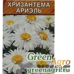 Хризантема Ариэль Аэлита Ц